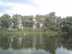 Danube_Delta_802